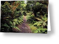 Glanleam, Co Kerry, Ireland Path In The Greeting Card