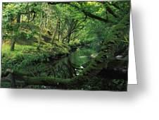 Glengarriff River, County Cork, Ireland Greeting Card