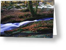 Glenmacnass Waterfall, Co Wicklow Greeting Card