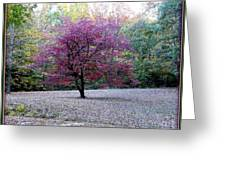 Glenna's Dogwood In The Fall Greeting Card
