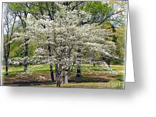 Glenna's Dogwood In The Spring Greeting Card