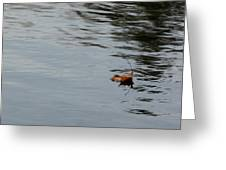 Gliding Across The Pond Greeting Card