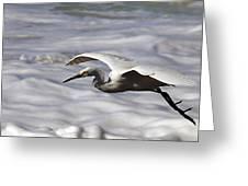 Gliding Snowy Egret Greeting Card