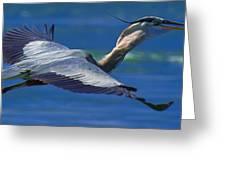 Gliding Great Blue Heron Greeting Card