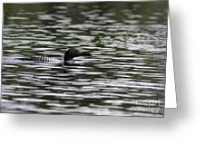 Gliding Loon Greeting Card by Chris Hill