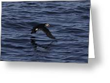 Gliding Puffin Greeting Card