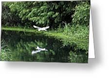 Gliding Through The Swamp Greeting Card