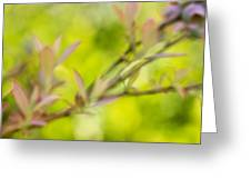 Glimpse Of Spring Greeting Card