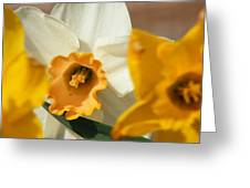 Glimpse Of White Greeting Card