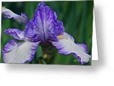 Glorious Iris Greeting Card