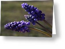 Glorious Purple Greeting Card