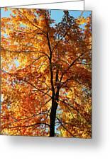Glory Of Autumn Greeting Card by Jennifer Compton