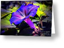 Glory Of The Morning Greeting Card