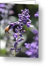 Glowing Bee In Purple Flowers Greeting Card