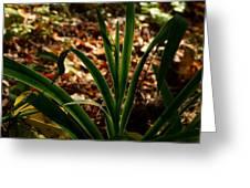 Glowing Iris Plant 3 Greeting Card