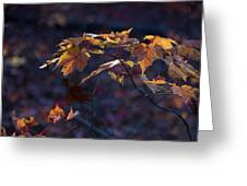 Glowing Maple Leaves Greeting Card
