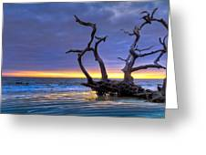 Glowing Sands At Driftwood Beach Greeting Card by Debra and Dave Vanderlaan