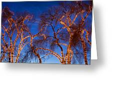 Glowing Trees Greeting Card