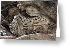Gnarled Olive Tree Wood Greeting Card