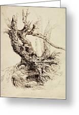 Gnarled Tree Trunk Greeting Card