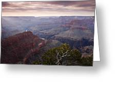 Gnarly Tree In The Canyon Greeting Card