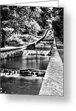 Gnoll Country Park 4 Mono Greeting Card