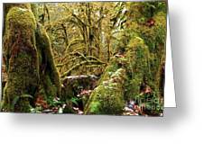 Gnomes In The Rainforest Greeting Card