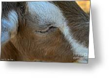 Goat Dreams Greeting Card