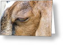 Goat Lashes Greeting Card