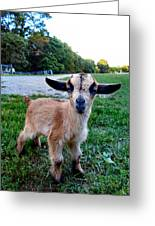 Goatee Greeting Card