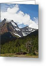 Going To The Sun Mountain Glacier National Park Spring Tree Larry Darnell Greeting Card