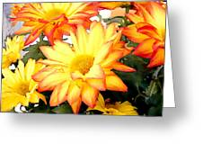 Gold And Red Autumn Mums Greeting Card