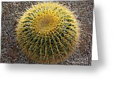 Gold Barrel Cactus   No 1 Greeting Card