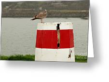 Gold Beach Gull Greeting Card