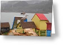 Gold Beach Gulls Greeting Card