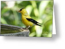 Gold Finch At The Bird Bath Greeting Card