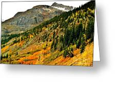 Gold In Colorado Greeting Card