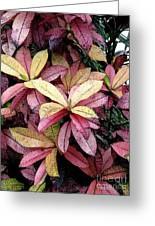 Gold Red And Purple Leaves Greeting Card