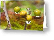 Golden Autumn Drops In Greeting Card