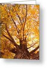 Golden Autumn View Greeting Card