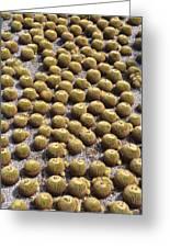Golden Barrel Cactus 1 Greeting Card