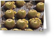 Golden Barrel Cactus 2 Greeting Card