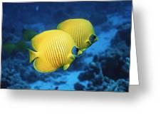 Golden Butterflyfish Pair Greeting Card