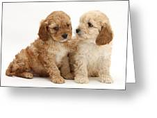 Golden Cockerpoo Puppies Greeting Card