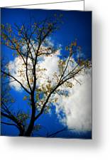 Golden Cottonwood And Arizona Skies Greeting Card