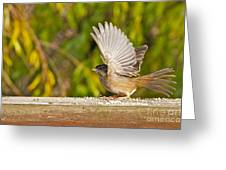 Golden Crowned Sparrow Greeting Card