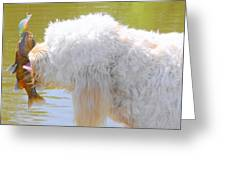 Golden Doodle And Goggle Eye Greeting Card