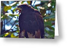 Golden Eagle II Greeting Card
