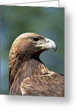 Golden Eagle In Profile Greeting Card