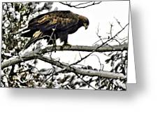 Golden Eagle Watches Greeting Card